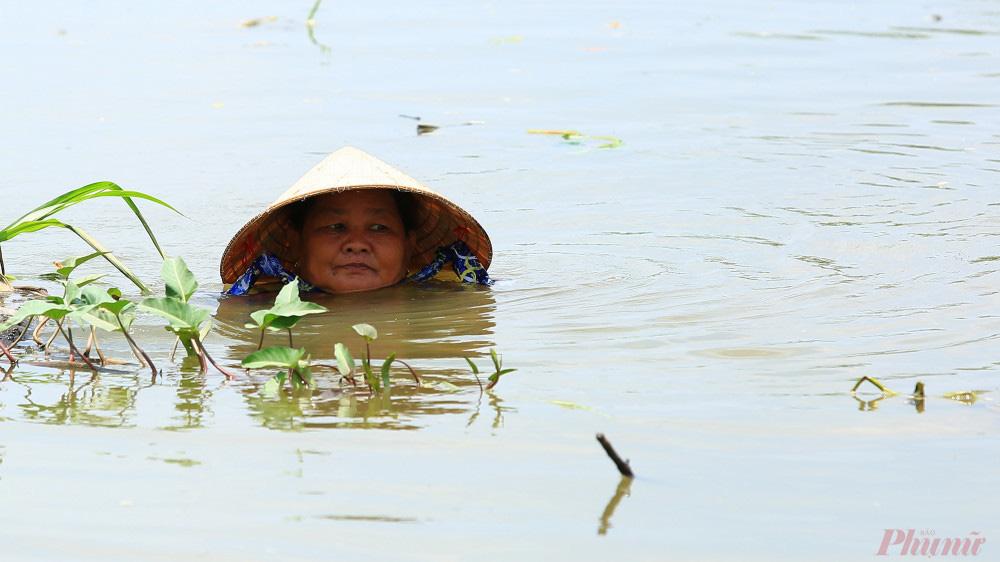 Nhọc nhằn nghề hái rau muống dại ở Sài Gòn - Ảnh 2.