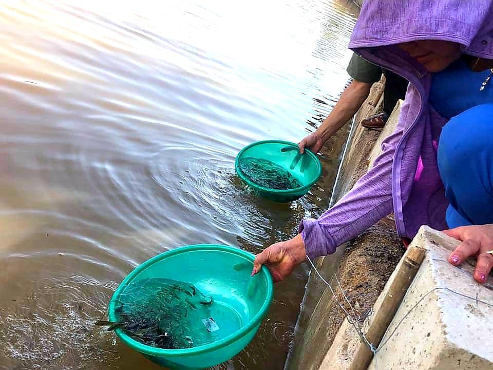 Lạng Sơn: Hơn 108.000 con cá giống được thả xuống sông Kỳ Cùng  - Ảnh 5.