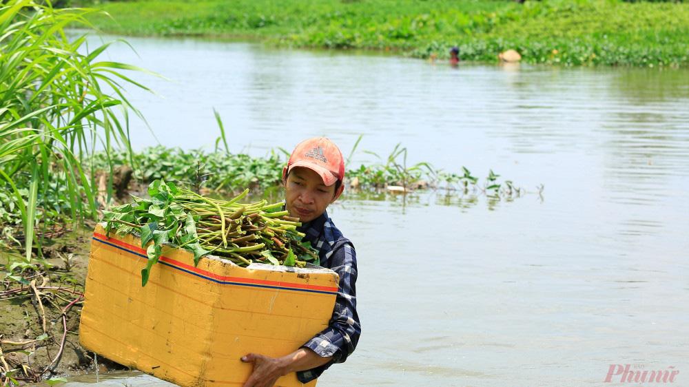 Nhọc nhằn nghề hái rau muống dại ở Sài Gòn - Ảnh 3.