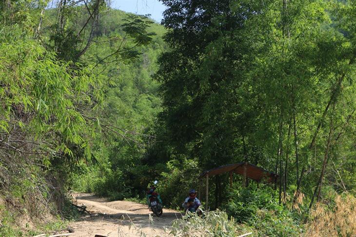 Châu chấu tre lưng vàng gây thiệt hại tại 8 tỉnh phía Bắc - Ảnh 1.