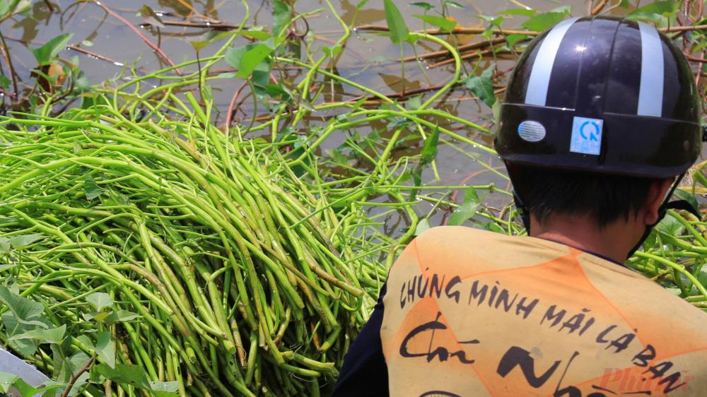 Nhọc nhằn nghề hái rau muống dại ở Sài Gòn - Ảnh 8.