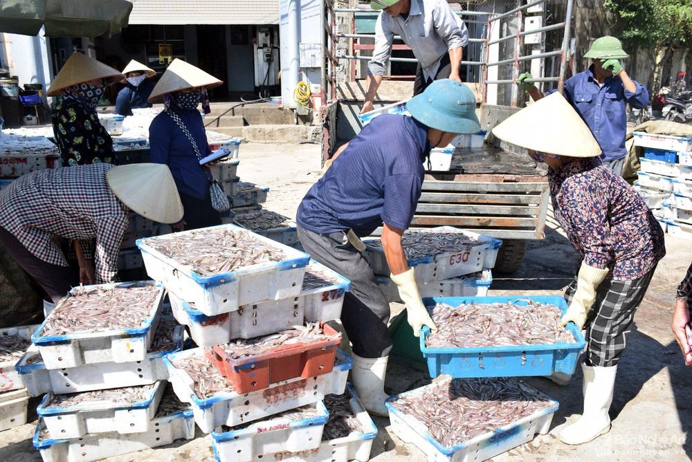 Giá cá trỏng ở Nghệ An chạm mức kỷ lục - Ảnh 3.