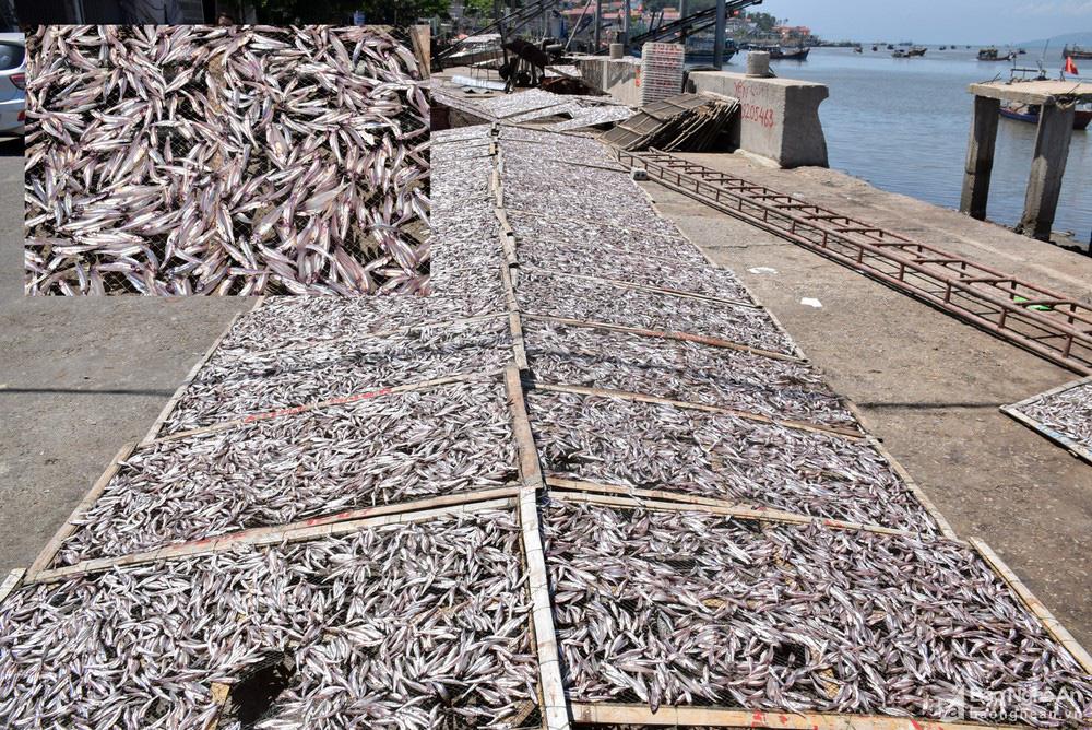 Giá cá trỏng ở Nghệ An chạm mức kỷ lục - Ảnh 4.