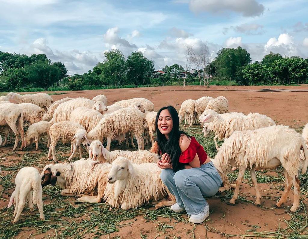 Lạc vào miền quê châu Âu tại 4 đồng cừu Việt Nam - Ảnh 5.