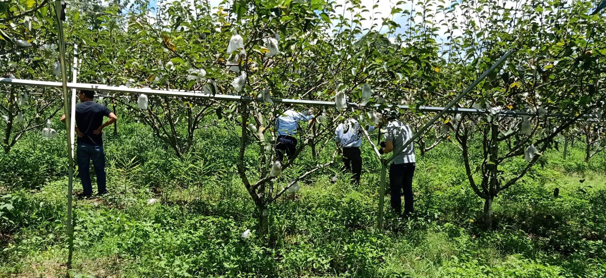 Làm nông nghiệp theo cách chưa từng có, nông sản Sơn La dễ dàng đi khắp thế giới - Ảnh 4.