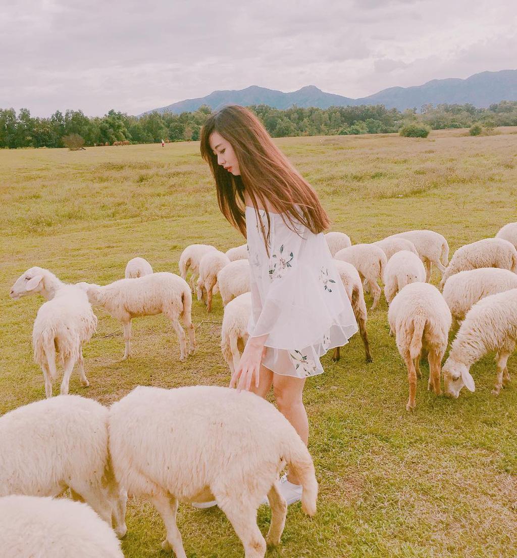 Lạc vào miền quê châu Âu tại 4 đồng cừu Việt Nam - Ảnh 7.