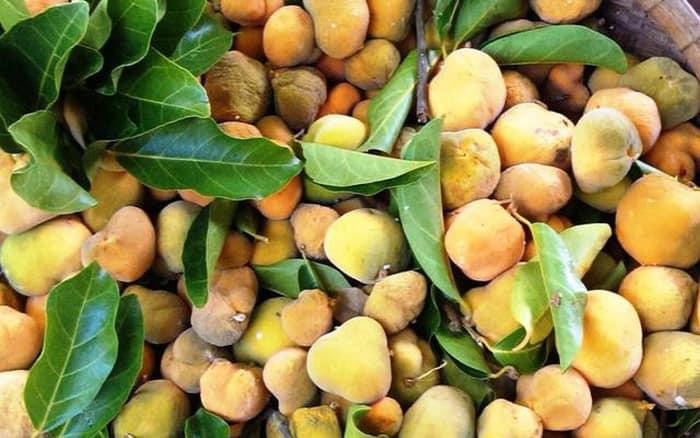 """Người Hà Nội """"rủ"""" nhau mua thứ quả rừng lạ mắt, mua cả rổ 5-7kg về ăn - Ảnh 4."""