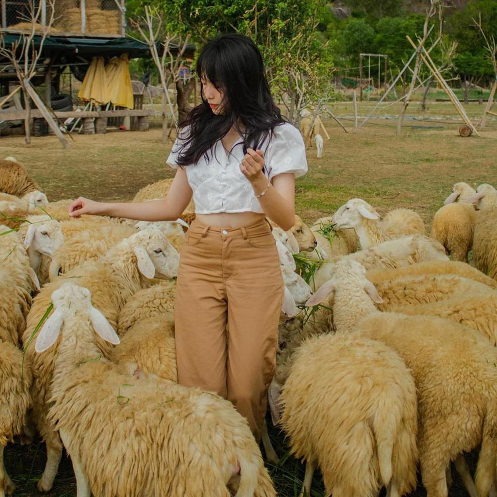 Lạc vào miền quê châu Âu tại 4 đồng cừu Việt Nam - Ảnh 3.