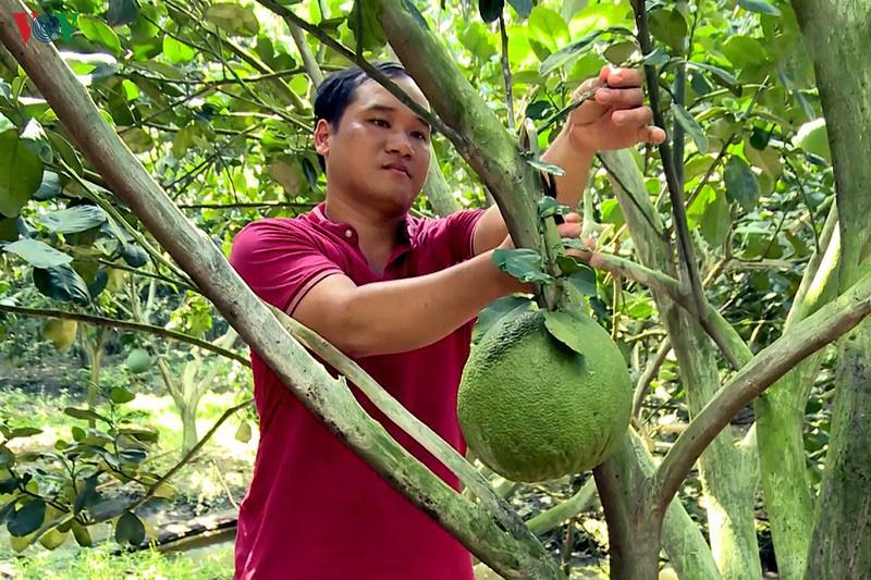 Trà Vinh: Nông dân thu nhập cao nhờ sản xuất theo hướng hữu cơ an toàn - Ảnh 1.