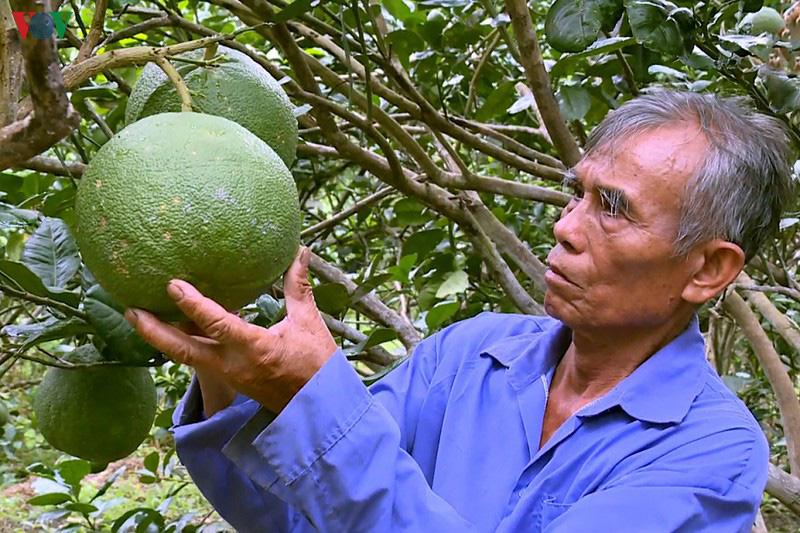 Trà Vinh: Nông dân thu nhập cao nhờ sản xuất theo hướng hữu cơ an toàn - Ảnh 2.