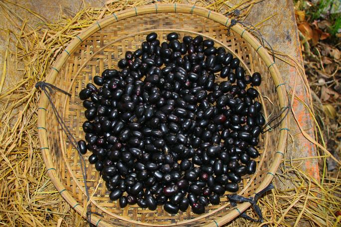 An Giang: Trái rừng đen sì xưa chỉ mọc hoang nay là hàng hiếm, có tiền cũng khó mua - Ảnh 7.