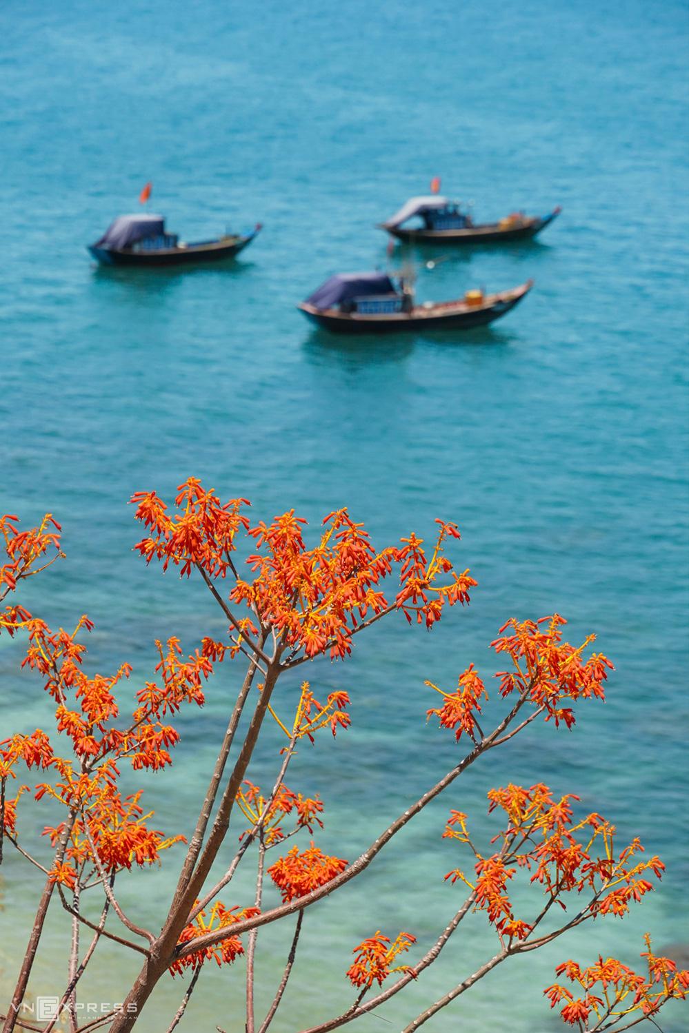 Cù Lao Chàm mùa hoa ngô đồng  - Ảnh 3.