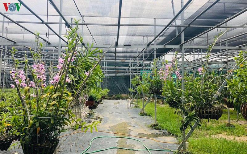 Cơn sốt lan đột biến tiền tỷ tràn về vựa hoa Đông La - Ảnh 1.