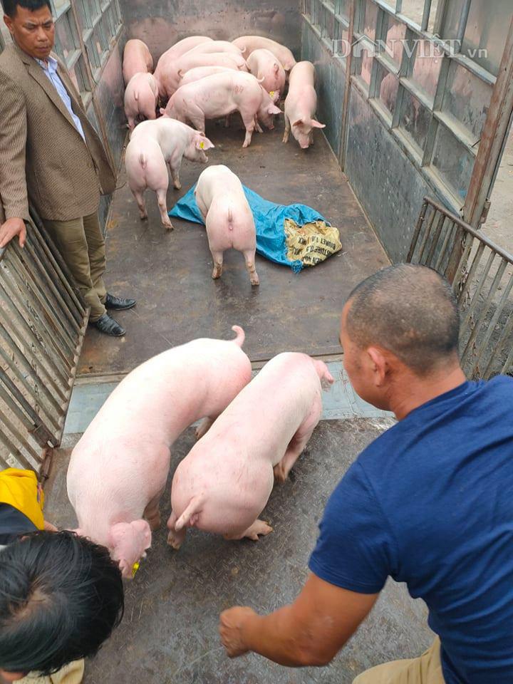"""Giá heo hơi hôm nay 4/7: Giá lợn im ắng, các """"ông lớn"""" vẫn lãi tiền tỷ mỗi ngày - Ảnh 2."""