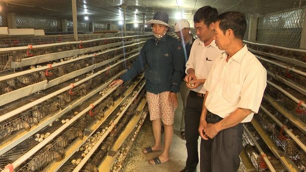 Quảng Bình: Nuôi chim bé như nắm tay mắn đẻ, một nông dân lời 1 tỷ/năm - Ảnh 1.