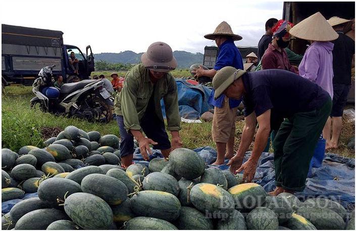 Lạng Sơn: Dưa hấu được mùa, 10 quả đẹp cả 10, trồng 15 sào nông dân lời 100 triệu - Ảnh 1.