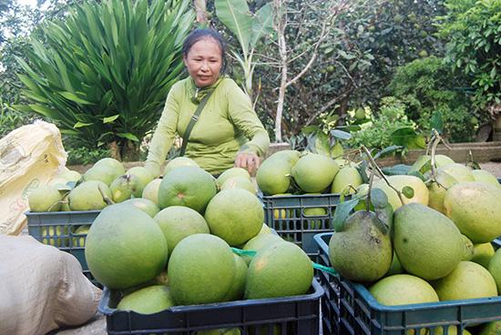"""""""Lạc"""" vào làng trồng thanh trà, cây nào cây nấy trĩu quả ở tỉnh Quảng Nam - Ảnh 4."""