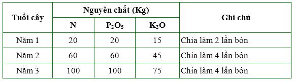 Đầu tư phân bón là mấu chốt quyết định năng suất của cây Mắc-ca  - Ảnh 6.