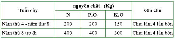 Đầu tư phân bón là mấu chốt quyết định năng suất của cây Mắc-ca  - Ảnh 7.