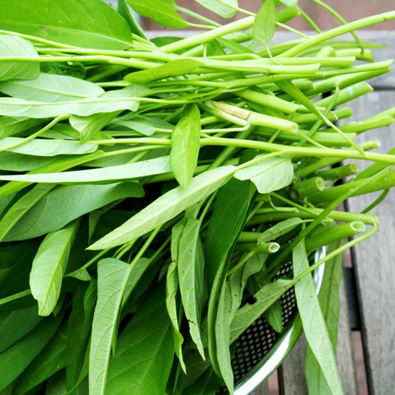 Mẹ bỉm sữa mách trồng 5 loại rau xanh tốt vù vù đầu tháng 7 - Ảnh 4.