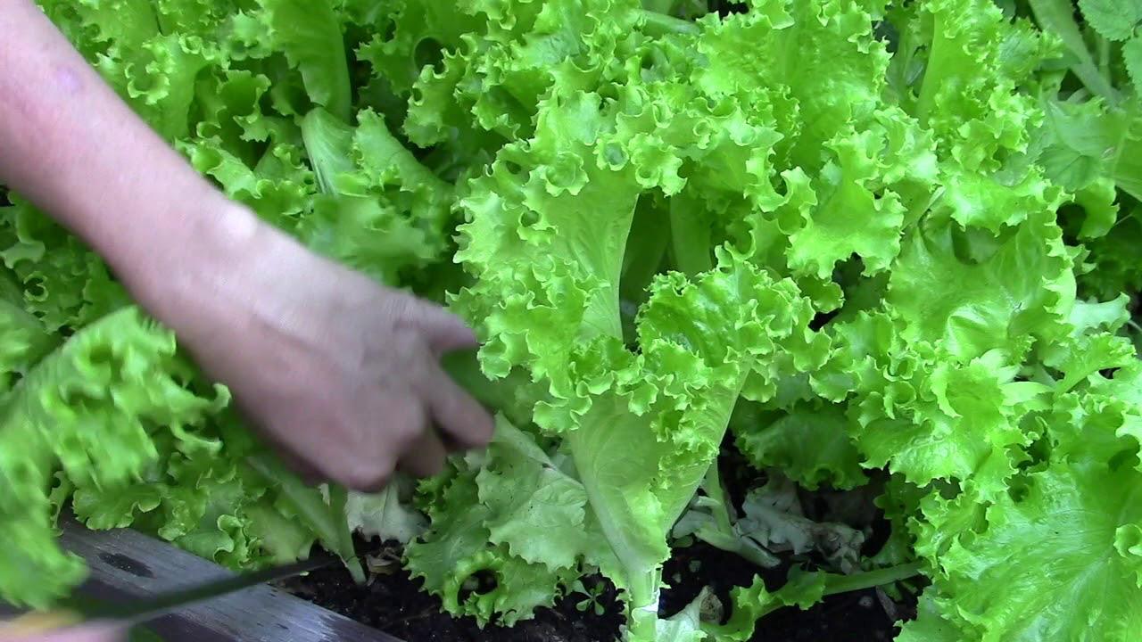Mẹ bỉm sữa mách trồng 5 loại rau xanh tốt vù vù đầu tháng 7 - Ảnh 6.
