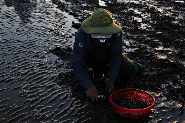 Chùm ảnh: Cào ngao thuê, chị em miền biển Nghệ An kiếm nửa triệu đồng/ngày - Ảnh 1.