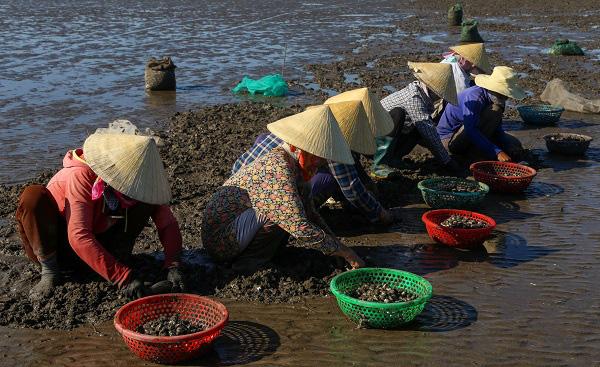 Chùm ảnh: Cào ngao thuê, chị em miền biển Nghệ An kiếm nửa triệu đồng/ngày - Ảnh 5.
