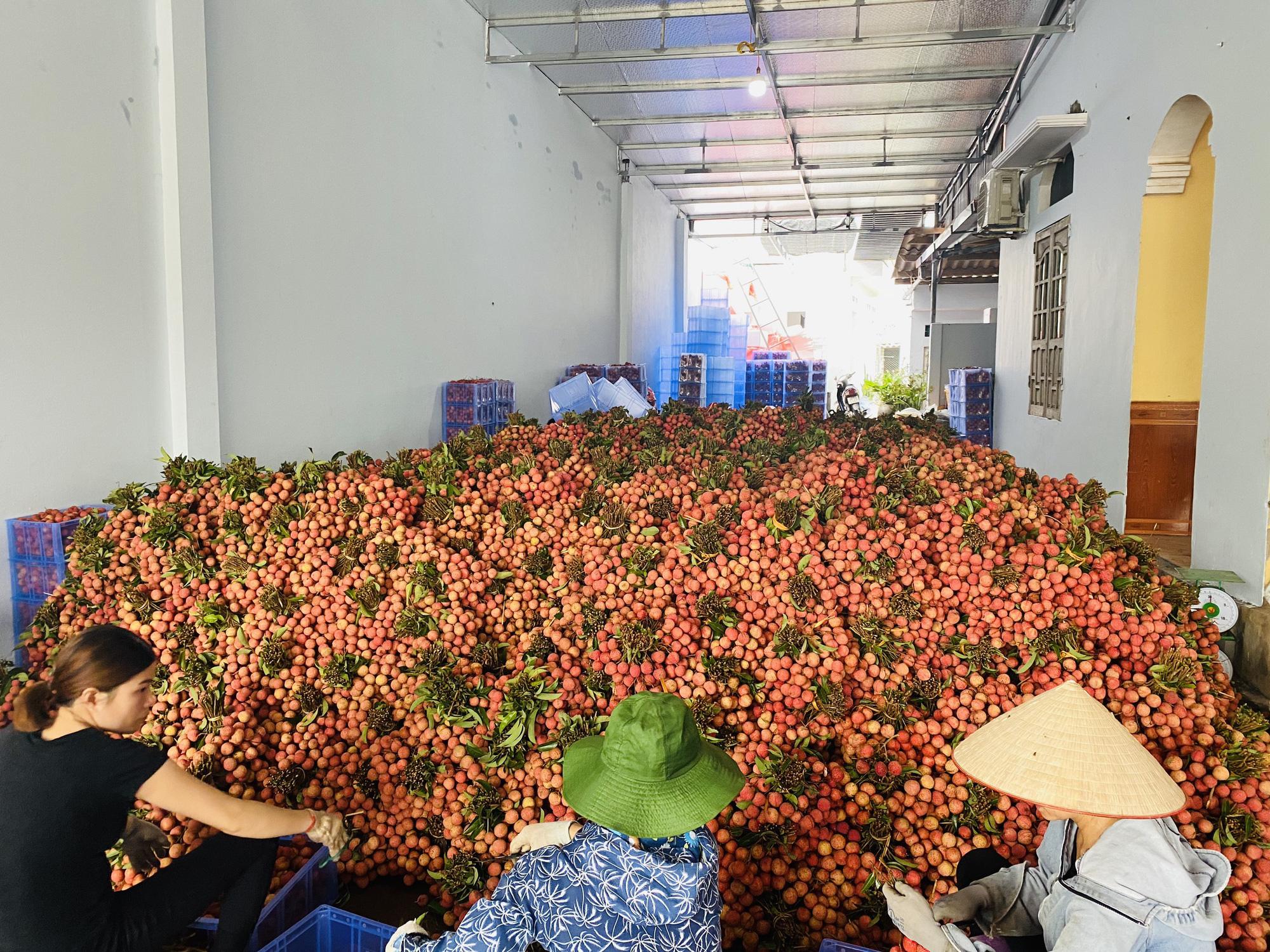 137 thương nhân Trung Quốc, 300 điểm cân gom 77.000 tấn vải thiều đưa sang biên giới - Ảnh 1.