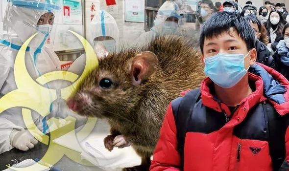 """Bệnh dịch hạch bùng phát ở Trung Quốc thổi bùng sợ hãi đại dịch """"Cái chết đen"""" - Ảnh 1."""