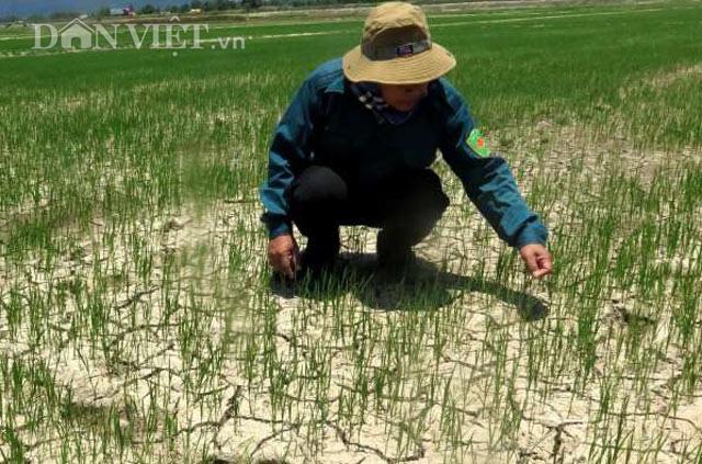 Quảng Ngãi: Thị xã chi tiền tỷ ngân sách đào giếng lấy nước sinh hoạt cho dân  - Ảnh 2.