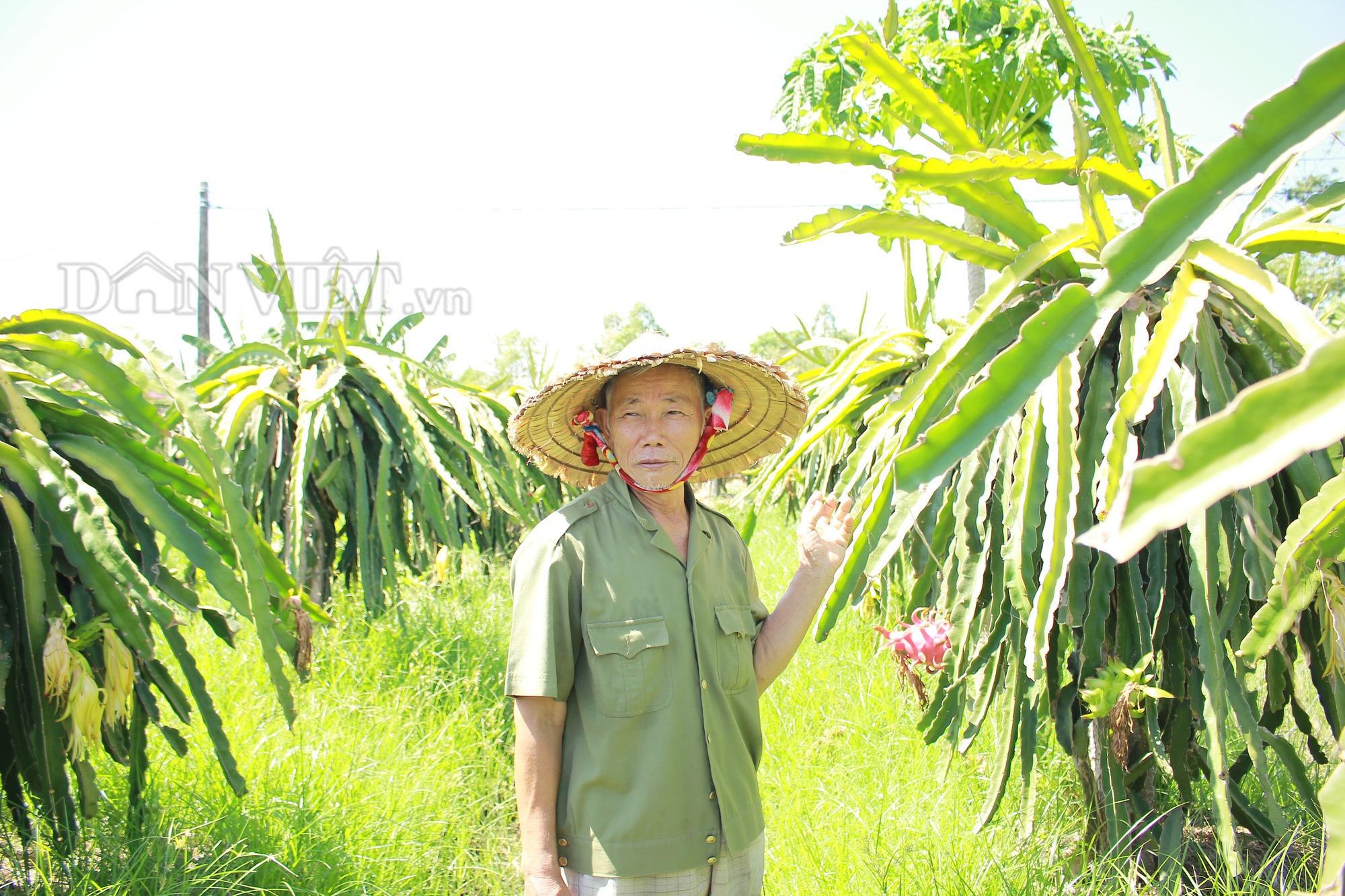 """Nghệ An: """"Lão gàn"""" biến đất sỏi đá thành vườn cây ăn quả, thu hàng trăm triệu mỗi năm - Ảnh 2."""