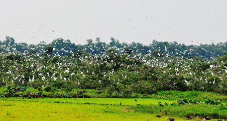 Giữa Đồng Tháp Mười sen hồng nở bạt ngàn, cỏ dại mọc tốt um, chim trời vô số kể - Ảnh 3.