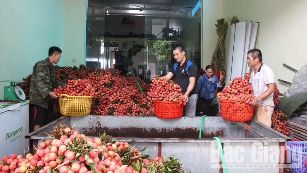 Bắc Giang: Tăng trưởng kinh tế ước đạt 6,4% trong 6 tháng đầu năm 2020 - Ảnh 1.