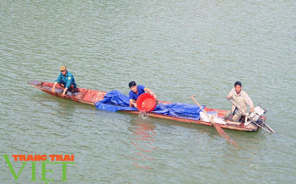 Sơn La: Thả bổ sung hơn 200.000 cá giống vào hồ thuỷ điện Sơn La - Ảnh 1.