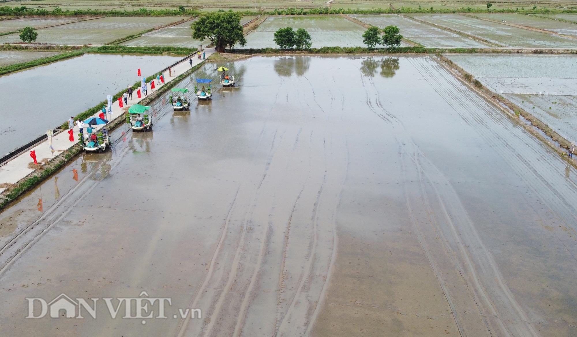 Hải Dương: Lần đầu tiên trình diễn máy cấy lúa trên đồng ruộng - Ảnh 13.