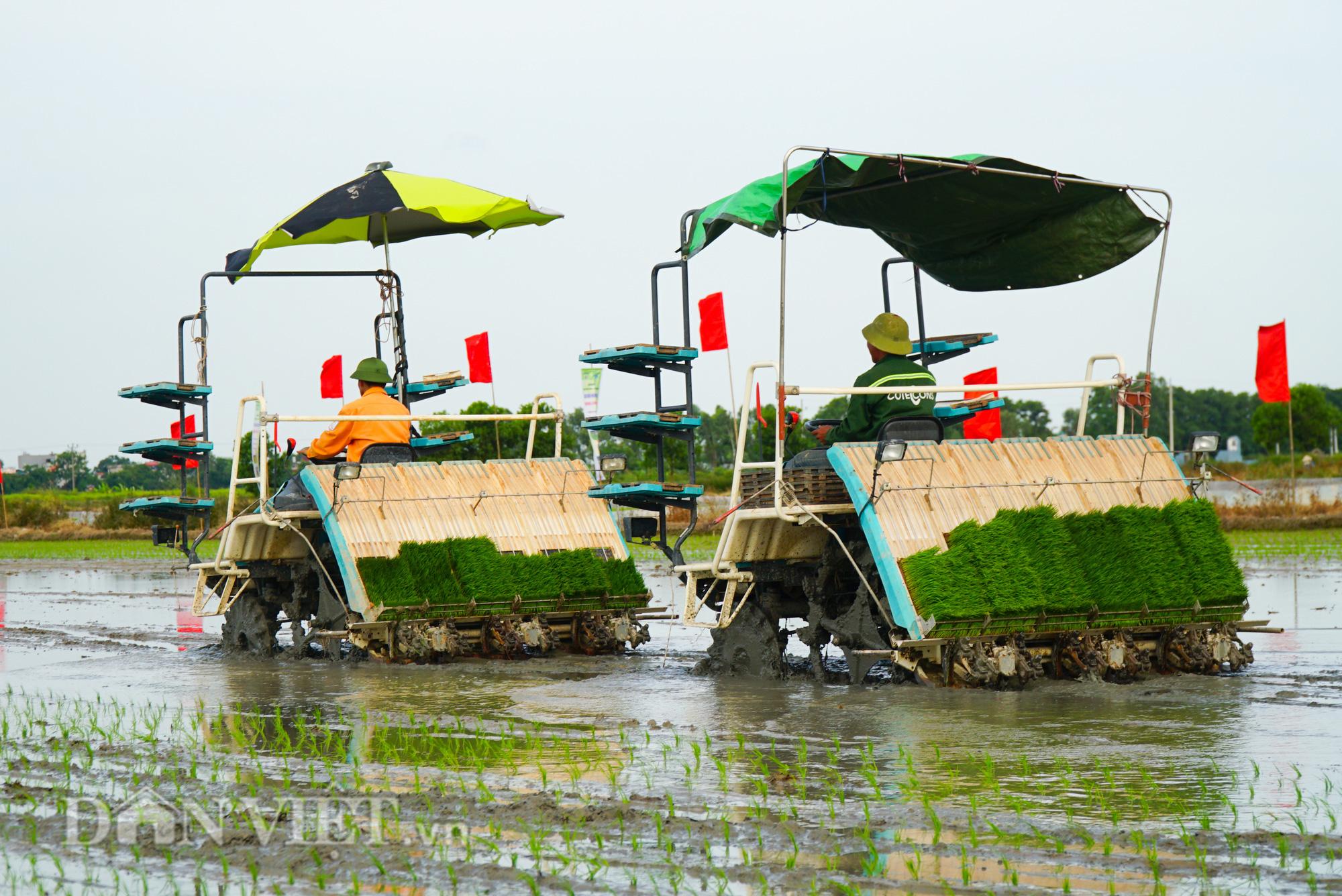 Hải Dương: Lần đầu tiên trình diễn máy cấy lúa trên đồng ruộng - Ảnh 8.