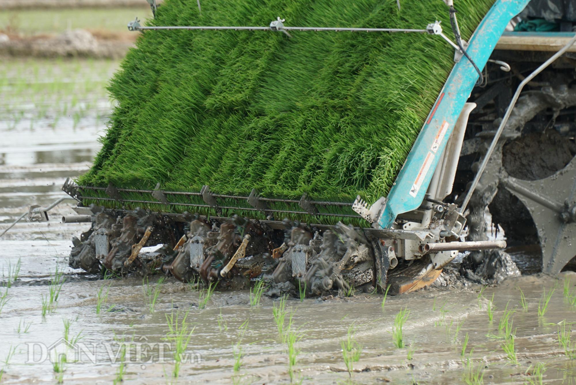 Hải Dương: Lần đầu tiên trình diễn máy cấy lúa trên đồng ruộng - Ảnh 11.