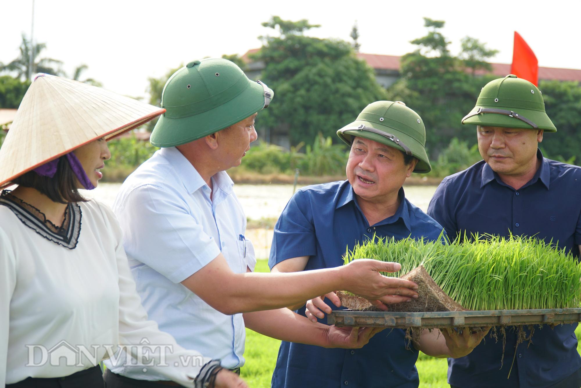 Hải Dương: Lần đầu tiên trình diễn máy cấy lúa trên đồng ruộng - Ảnh 4.