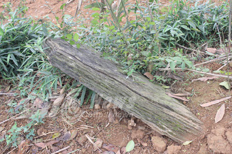 Nghĩa địa bí ẩn chôn những người bị hổ vồ bên sông Mã - Ảnh 3.