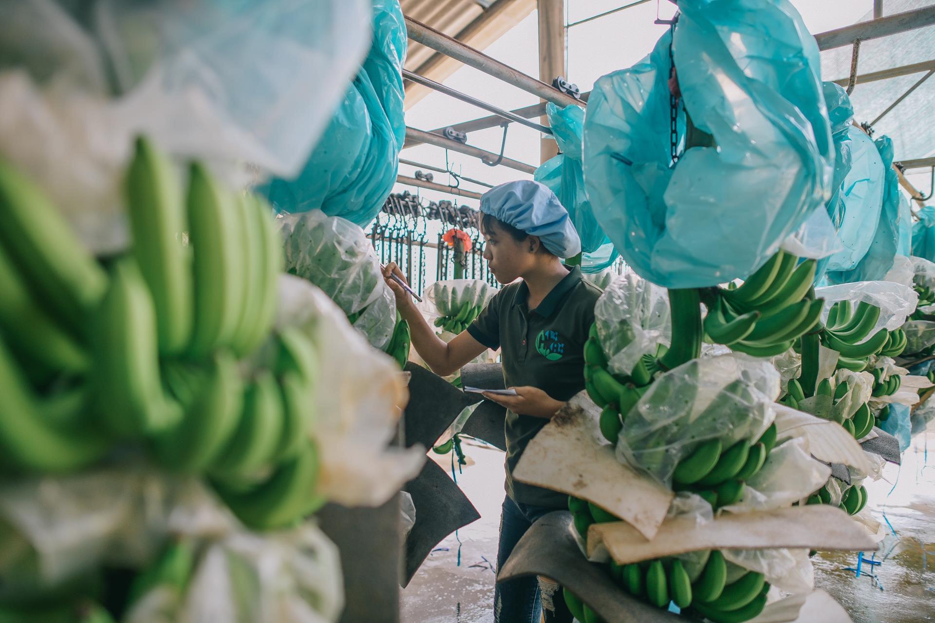 Ông Trương Gia Bình đề nghị xóa xuất khẩu tiểu ngạch, Vietjet mở đường bay thẳng chở nông sản sang Mỹ - Ảnh 2.