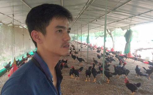 """Vụ """"gà nuôi chậm lớn"""" ở Đồng Nai: Doanh nghiệp cho rằng, giống gà chỉ là một trong các nguyên nhân?"""