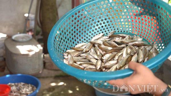 Phú Thọ: Độc đáo món cá thính gây nghiện, ăn vào rất tốn cơm - Ảnh 3.