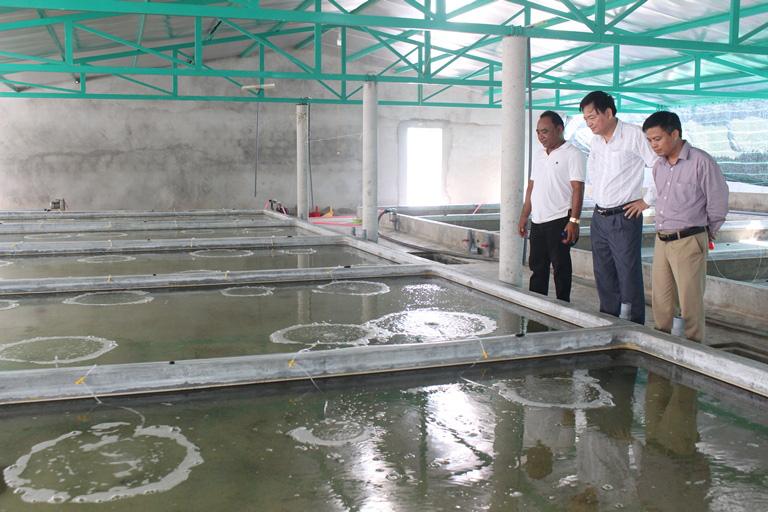 Khu nuôi ốc hương giống của gia đình anh Phạm Văn Dũng, thị trấn Cửa Tùng, huyện Vĩnh Linh, tỉnh Quảng Trị.