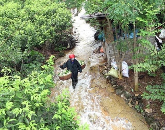 Đặc sản núi đá Xứ Lạng về Hà Nội, giá đắt gấp đôi vẫn đắt hàng - Ảnh 5.