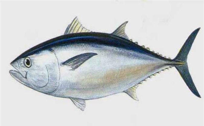7 loại cá mà bạn nên hạn chế ăn, loại thứ 4 rất nhiều người vẫn ăn thường xuyên - Ảnh 3.
