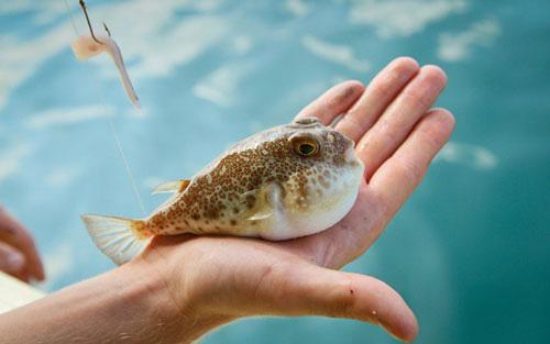 7 loại cá mà bạn nên hạn chế ăn, loại thứ 4 rất nhiều người vẫn ăn thường xuyên - Ảnh 1.