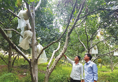 Bình Thuận: Trồng rừng mít không hạt, cây nào cũng đầy trái, thời dịch Covid-19 sao bán vẫn đắt hàng? - Ảnh 1.