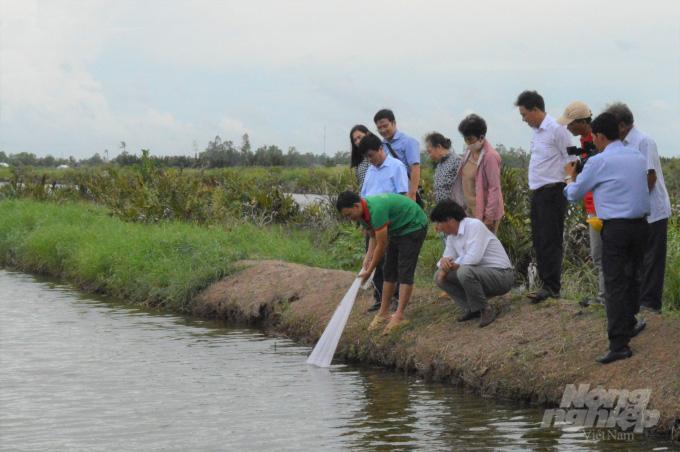 Kiên Giang: Cho cua kềnh ở chung với tôm sú, cứ 1ha dân bắt 1 tấn, bán được 160 triệu đồng - Ảnh 2.