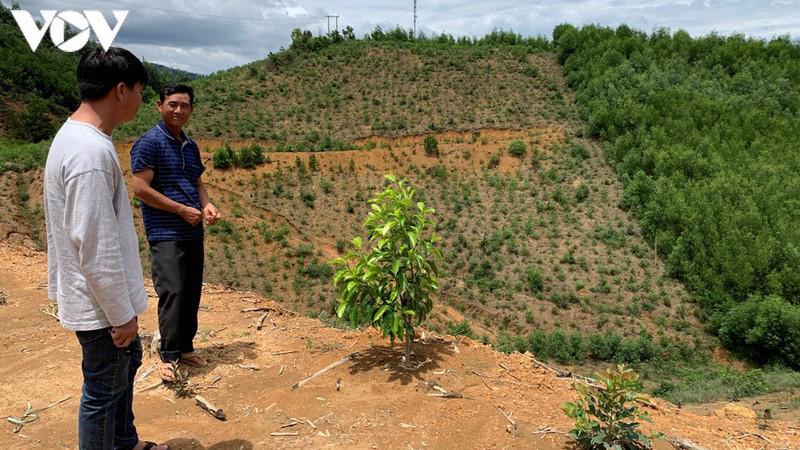 Rừng dổi cho thu vài trăm triệu đồng đến cả tỷ đồng mỗi năm - Ảnh 1.