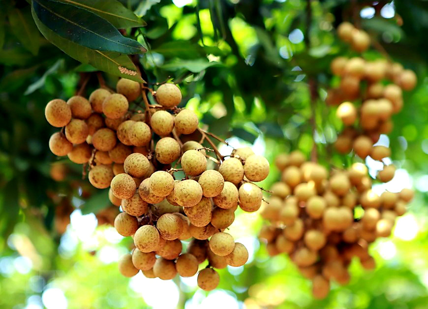 Nhà vườn Lạng Sơn và 7 tỉnh thành giao dịch trực tuyến với 70 DN nhập khẩu  - Ảnh 2.